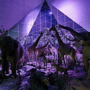 Ночь музеев 2020. Главные события для детей
