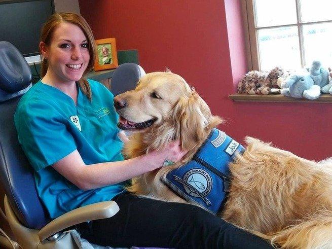 В США детскому стоматологу помогает золотистый ретривер