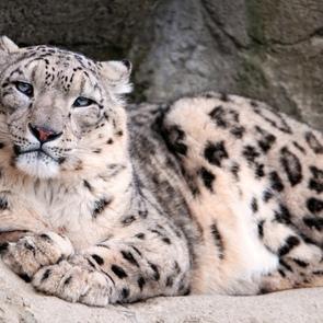 В Московском зоопарке установили новые веб-камеры