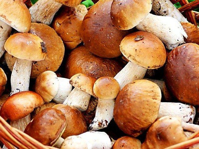 Какие грибы можно и нельзя детям