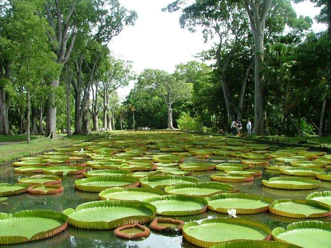 Ботанический сад Петра Великого: как попасть из зимы в лето