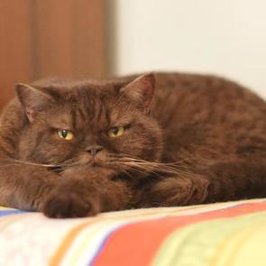 Кошки негативно влияют на проявления ПМС