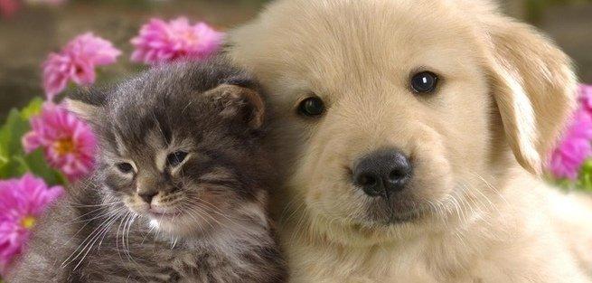 Животные из приюта хотят «Домой!»