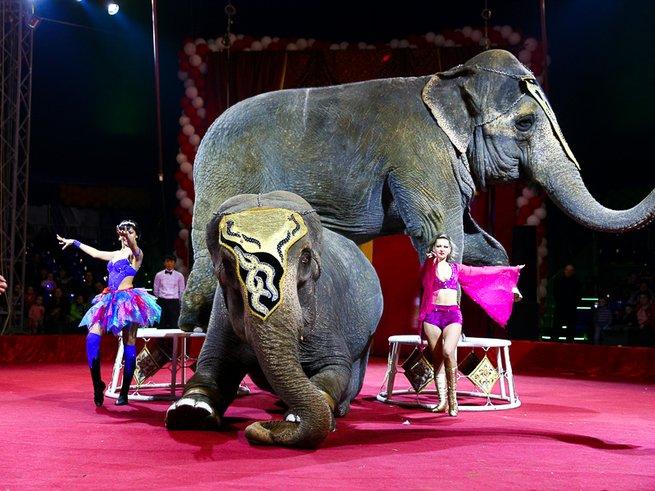 Лучшие дрессировщики мира представляют «Цирк больших зверей»