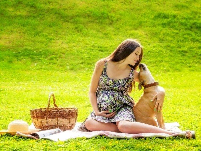 Домашние животные и ожидание ребёнка