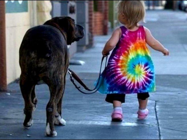 В Москве создан новый сервис - «Собака-гуляка»