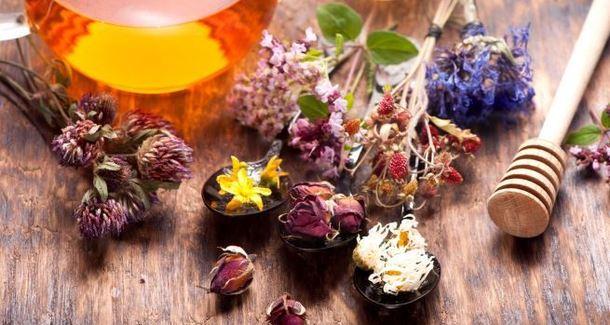 Фитотерапия: как правильно использовать силу растений