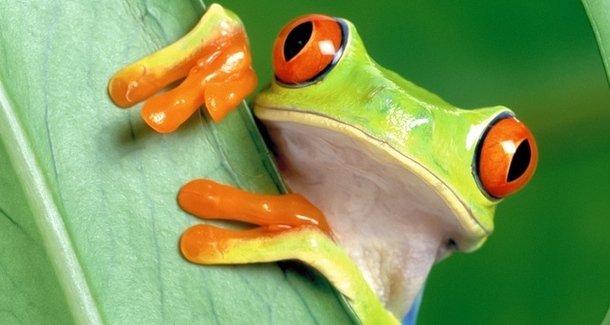 «Лягушачий живот» у детей