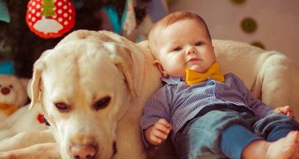 Мамин опыт: младенец - не повод отдавать любимца!