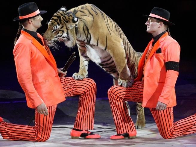 Большой цирк  предлагает испытать незабываемые «Эмоции...»
