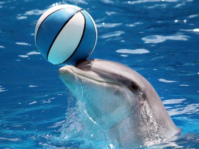 В ТРЦ «Рио» пройдёт необыкновенное шоу с дельфинами