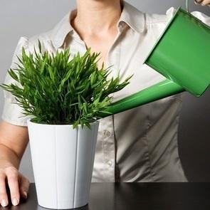 Как спасти комнатные растения, пока вы в отпуске