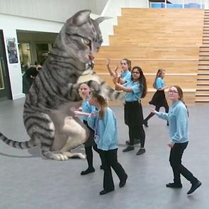 В британской школе поселилась кошка на солнечных батареях