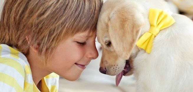 10 самых дружелюбных пород собак