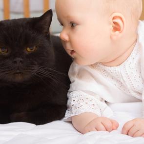Кошки могут быть опасны для детей