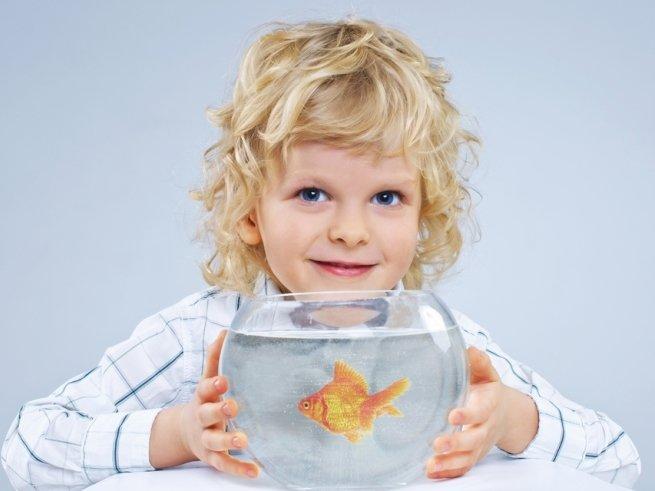 Мам, купи рыбку, или особенности ухода за аквариумом
