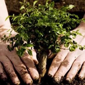 Москвичам разрешат сажать деревья в честь рождения детей