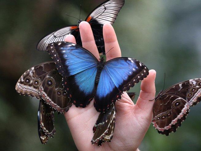 Отдохнуть от городской суеты предлагает Сад живых бабочек