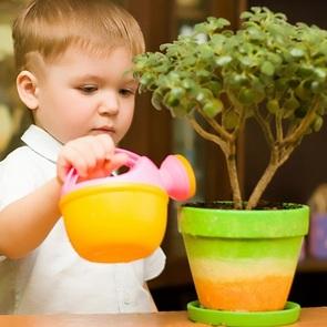 Цветы в доме и ребёнок: правила полезного соседства