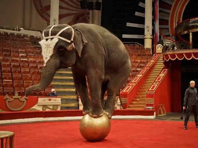 Цирк на Цветном приглашает на новое шоу