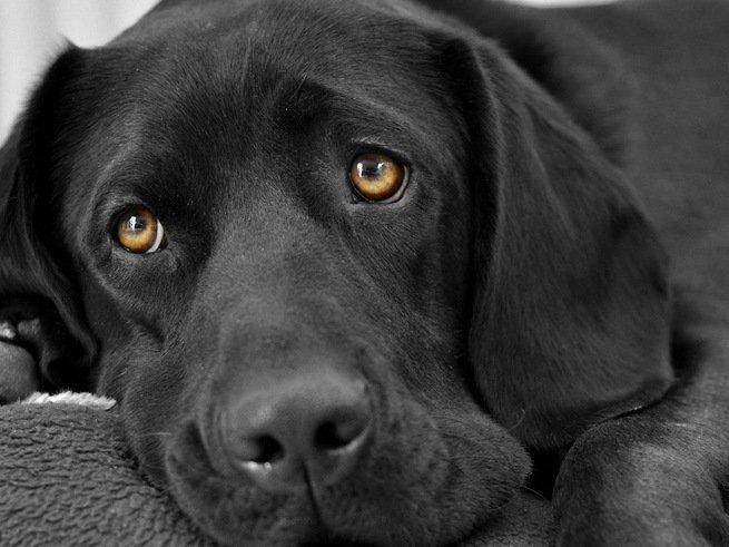 Ребёнку-аутисту разрешили взять в больницу свою собаку
