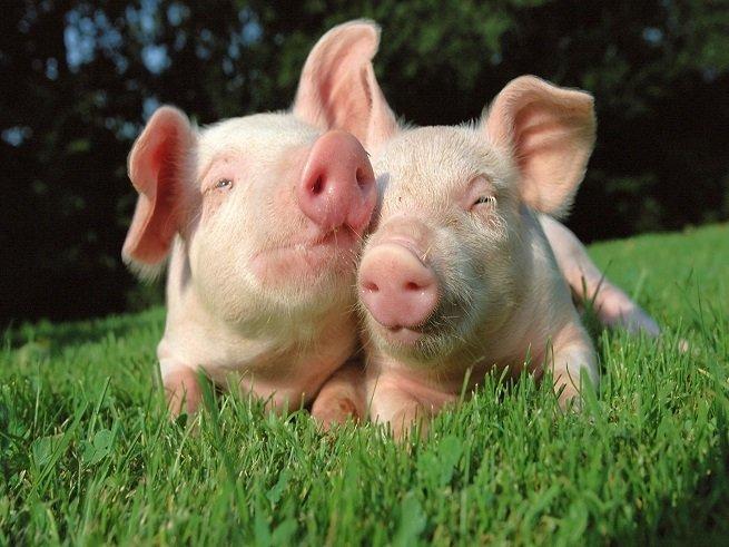Свинка у детей: симптомы, лечение, последствия