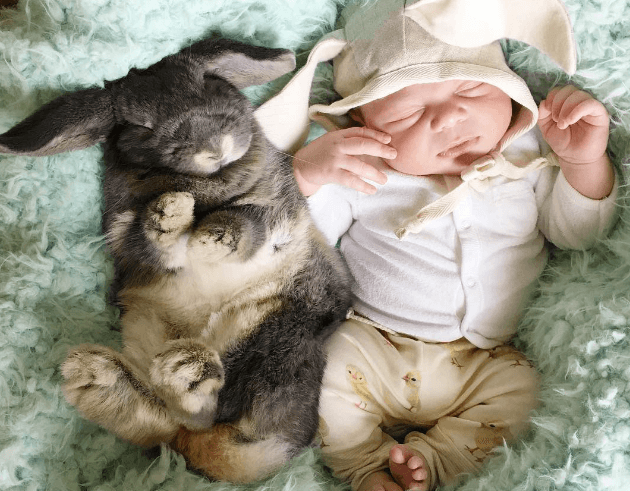 Малыш Флинн и его кролики стали новыми звёздами Instagram
