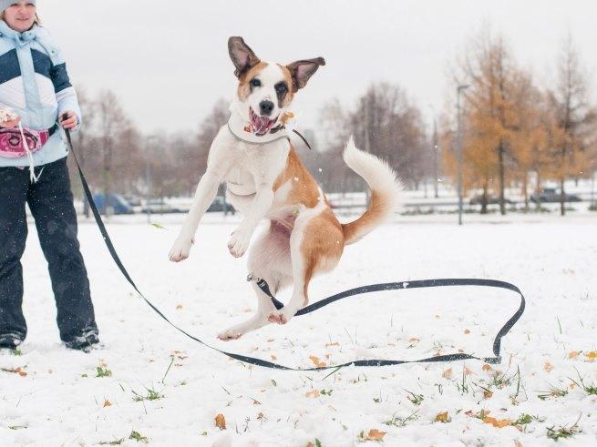 Найдите себе питомца на празднике «Собака-согревака»