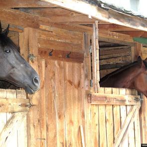 В Измайловском парке открылся конный двор
