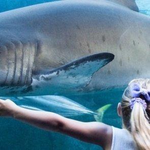 Шоу кормления акул в Батискафе