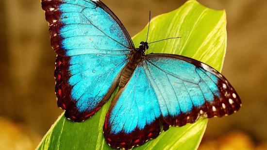 В музее Тимирязева можно увидеть бабочек среди зимы
