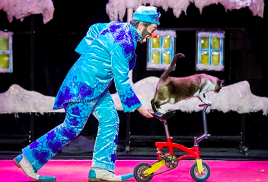 Кошки Юрия Куклачёва расскажут «Зимнюю сказку»
