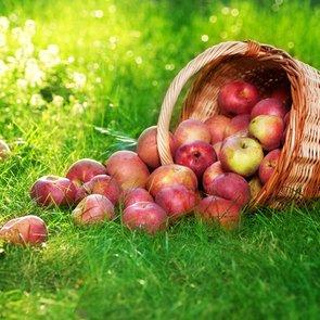 Чем полезны яблоки для организма