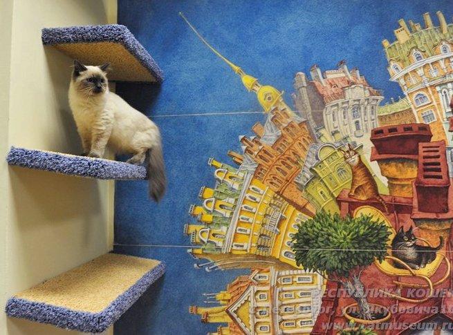 Всё о кошке в Музее кошки