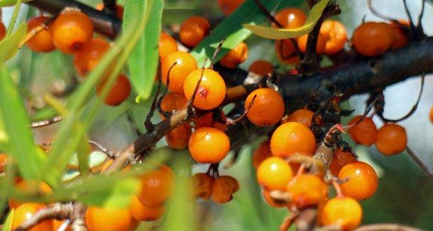 Чем полезен витамин Е (токоферола ацетат)