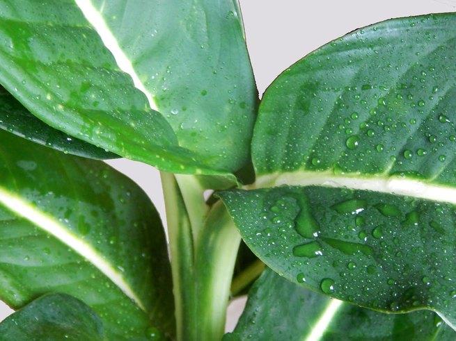 Комнатные растения, которые могут отравить вашего ребёнка