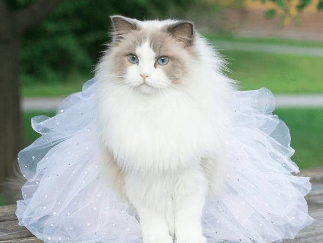 Принцесса Аврора - новая звезда Instagram