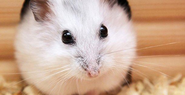 5 домашних животных, которые не доставят вам никаких хлопот