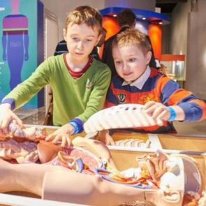 В Музее человека «Живые системы» детей ждут мифические существа