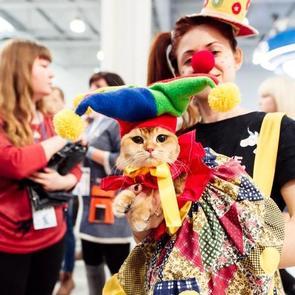 2–3 марта в Москве в «Крокусе Экспо» пройдёт международная выставка кошек «Кэтсбург»