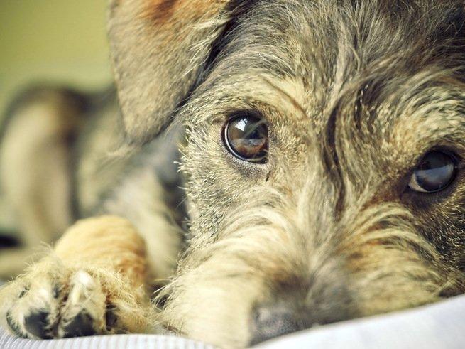 Люди и собаки связаны на уровне биохимии