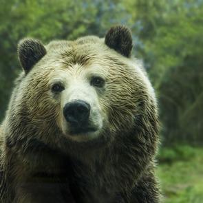 В сахалинскую школу чуть не забрался медведь: видео