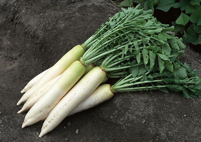 Сорта белой моркови калорийность польза и вред