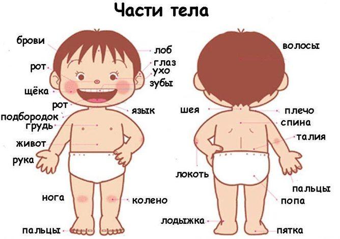 Мое тело.