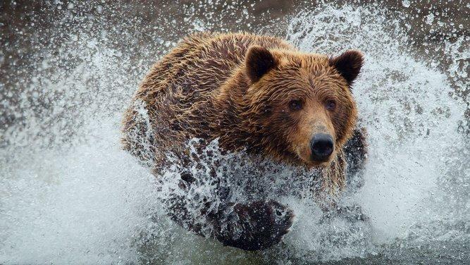 Пришёл медведь к броду